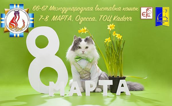 Породистые котята Лукоморье Одесса Украина